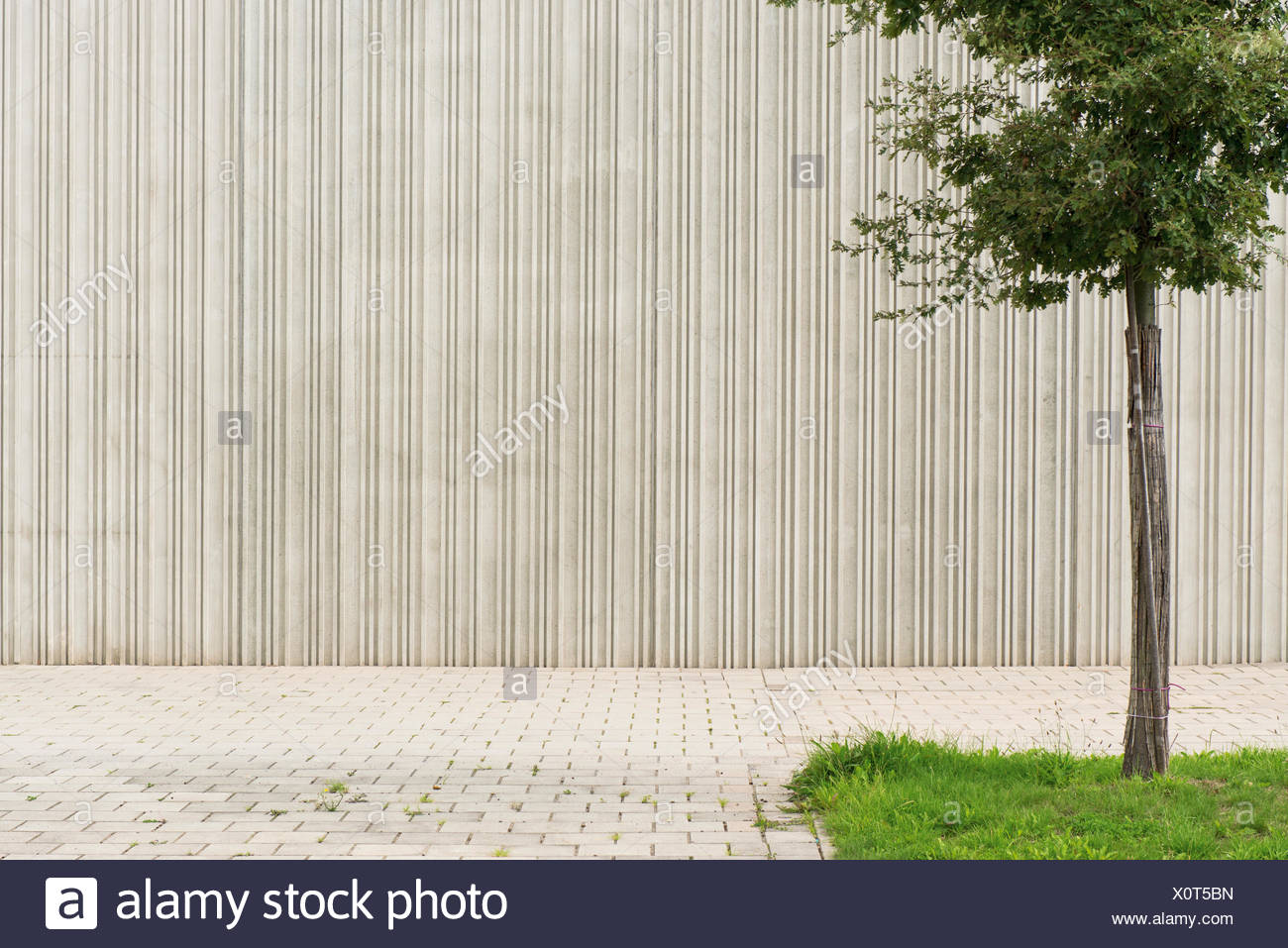 Germany, Monchengladbach, Tree in front of concrete wall - Stock Image