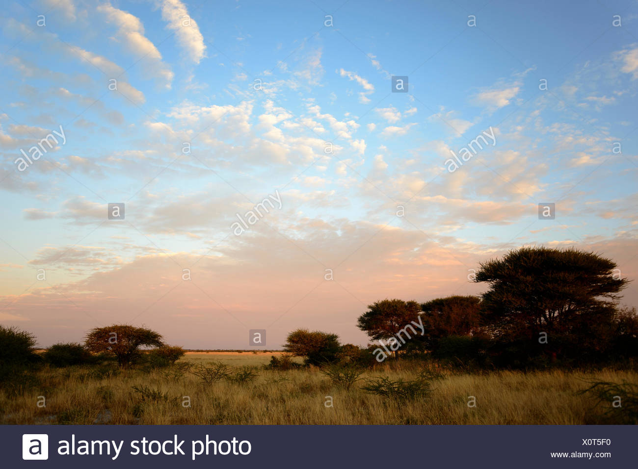 Sunrise, Deception Valley, Central Kalahari Game Reserve, Botswana - Stock Image