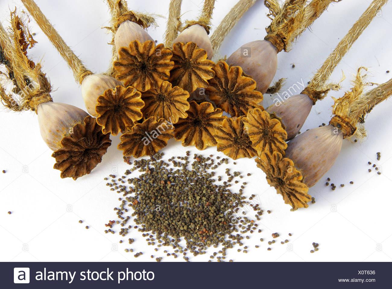 optional death flower - Stock Image