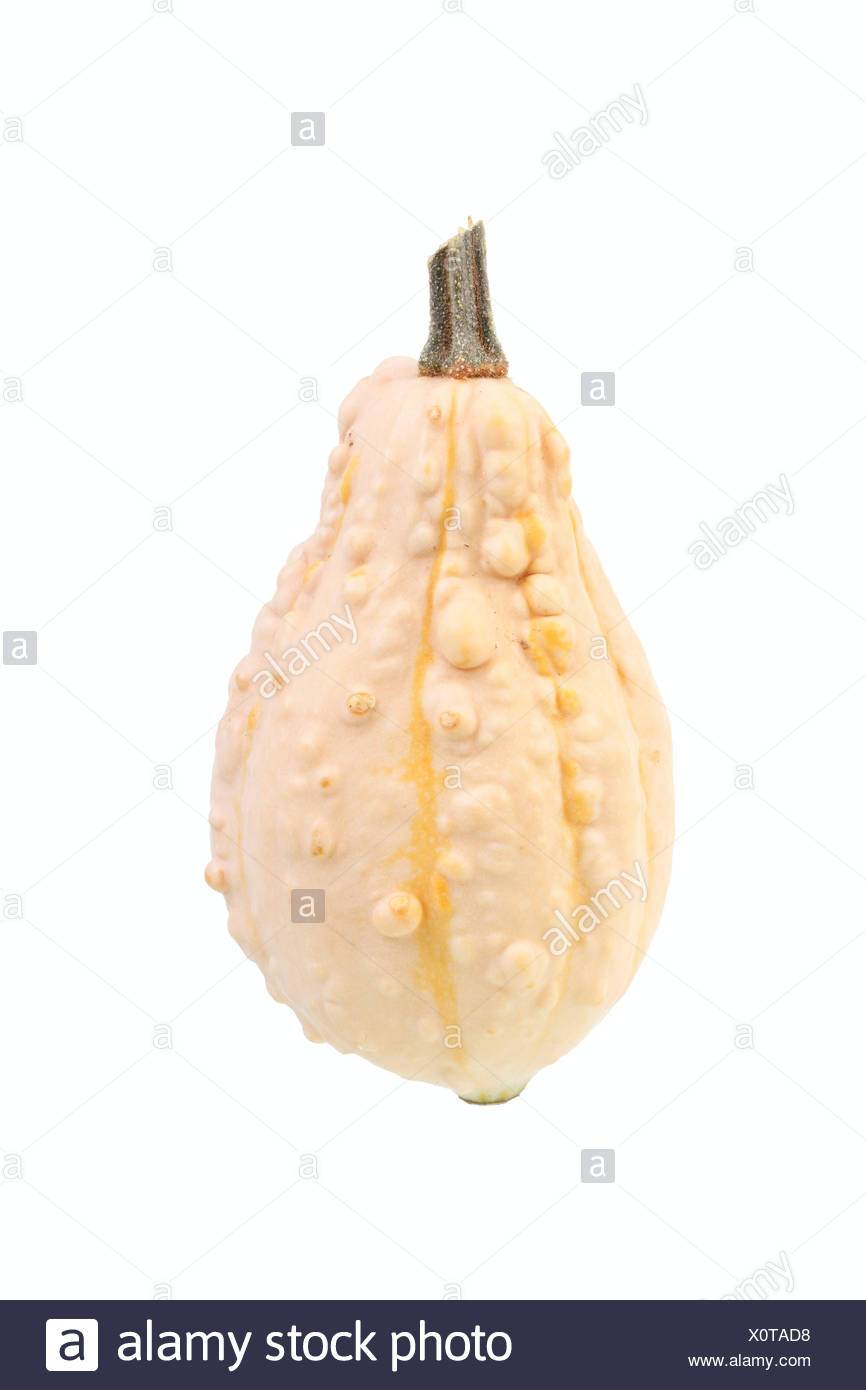 Warty ornamental gourd - Stock Image