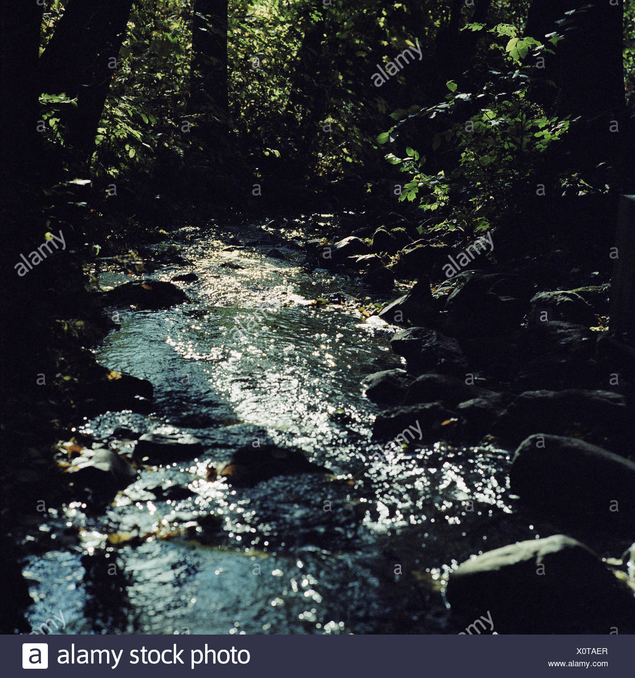Small stream flowing through forest. Stock Photo