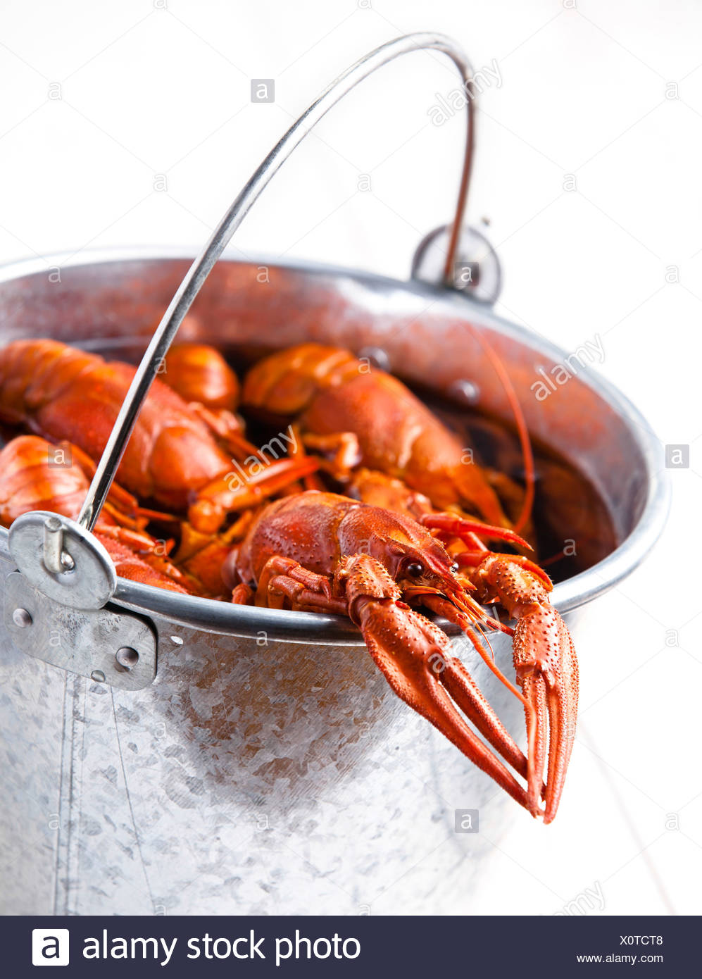 Boiled lobsters in bucket on white background - Stock Image