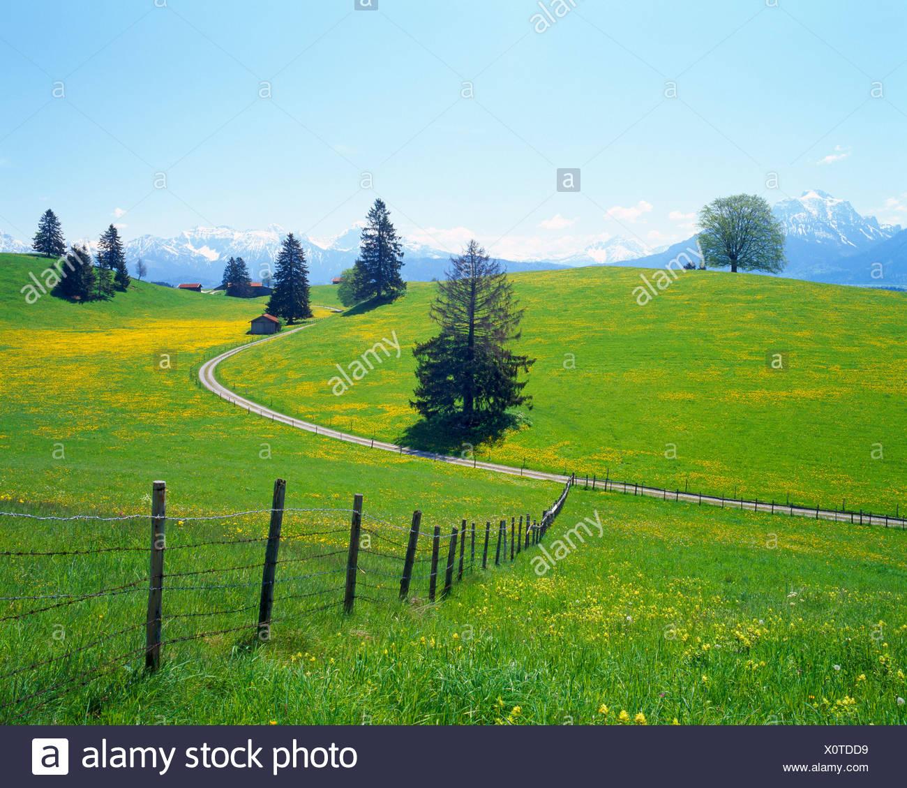 Landscape near Fuessen, spring, east Allgaeu, Bavaria, Germany, Europe Stock Photo