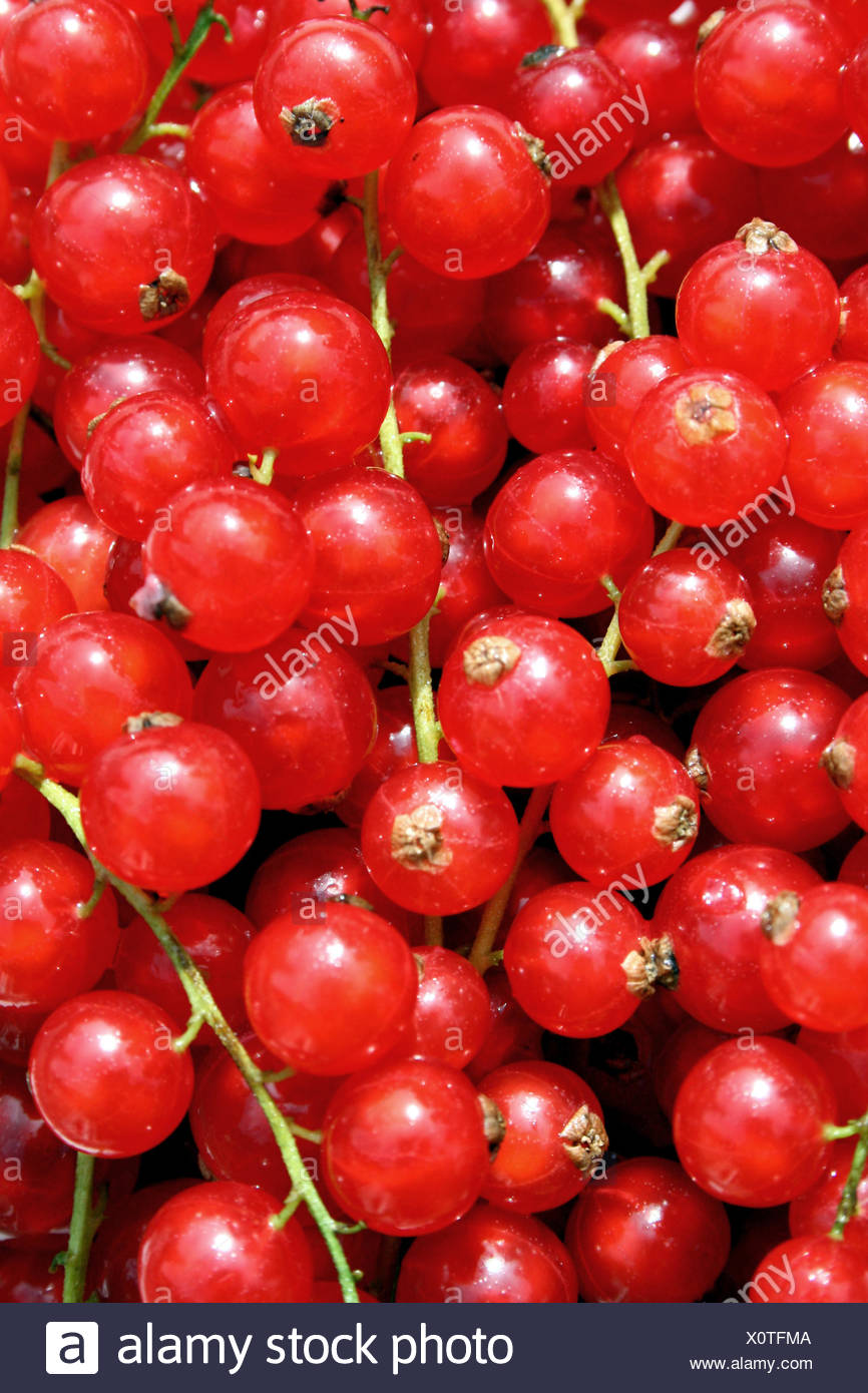 currants (8) - Stock Image
