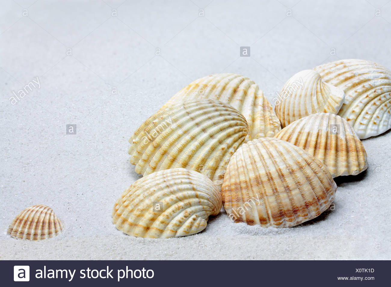 shells exempted - Stock Image