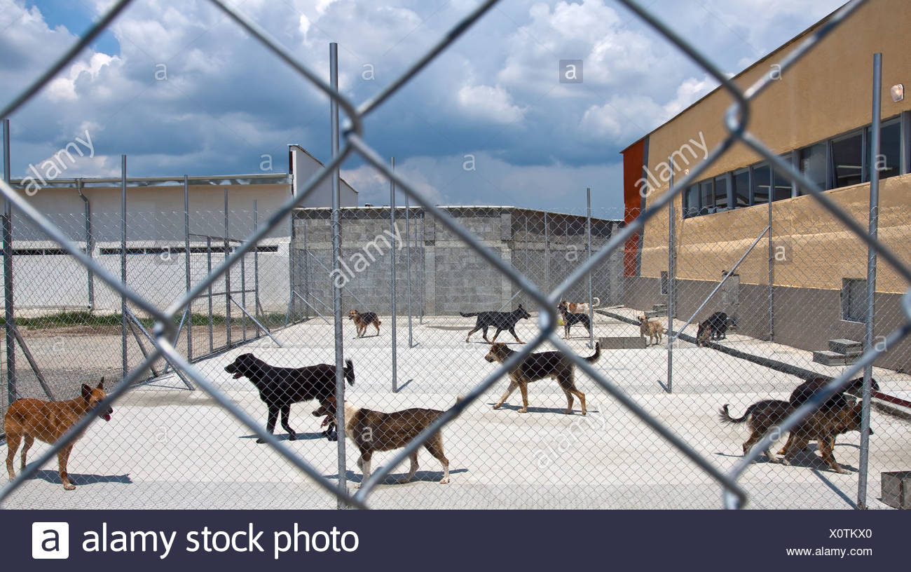 dogs shelter - Stock Image