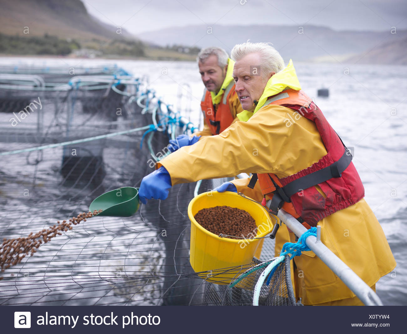 Worker feeding fish in farm - Stock Image