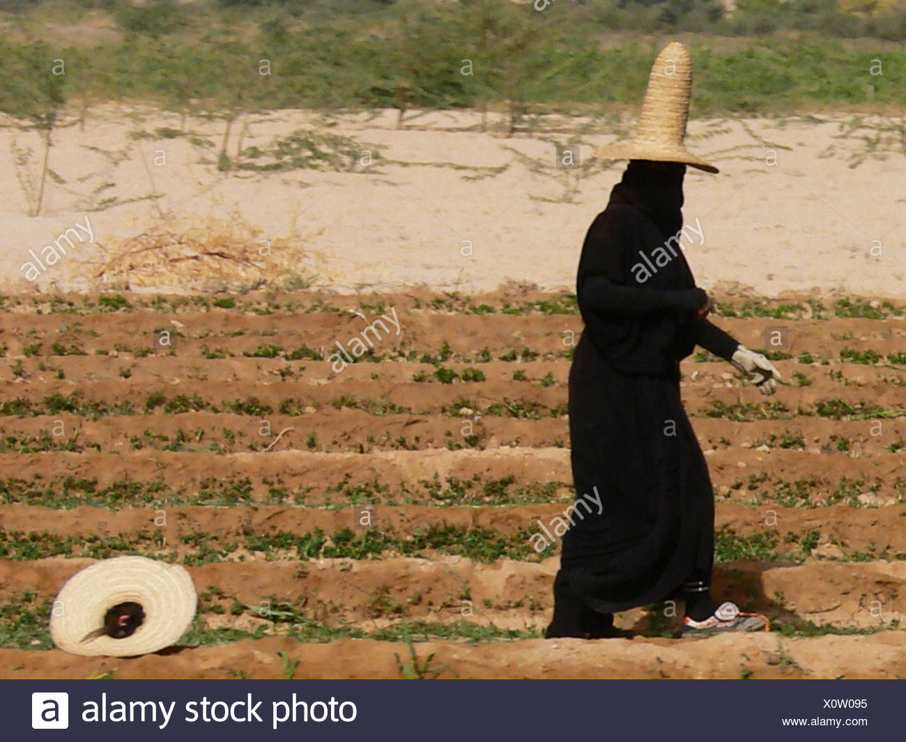 veiled woman with traditional straw hat on field, Yemen - Stock Image