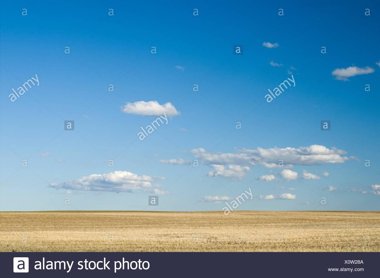 Pastureland, Rural Municipality of Val Marie Saskatchewan, Canada. - Stock Image
