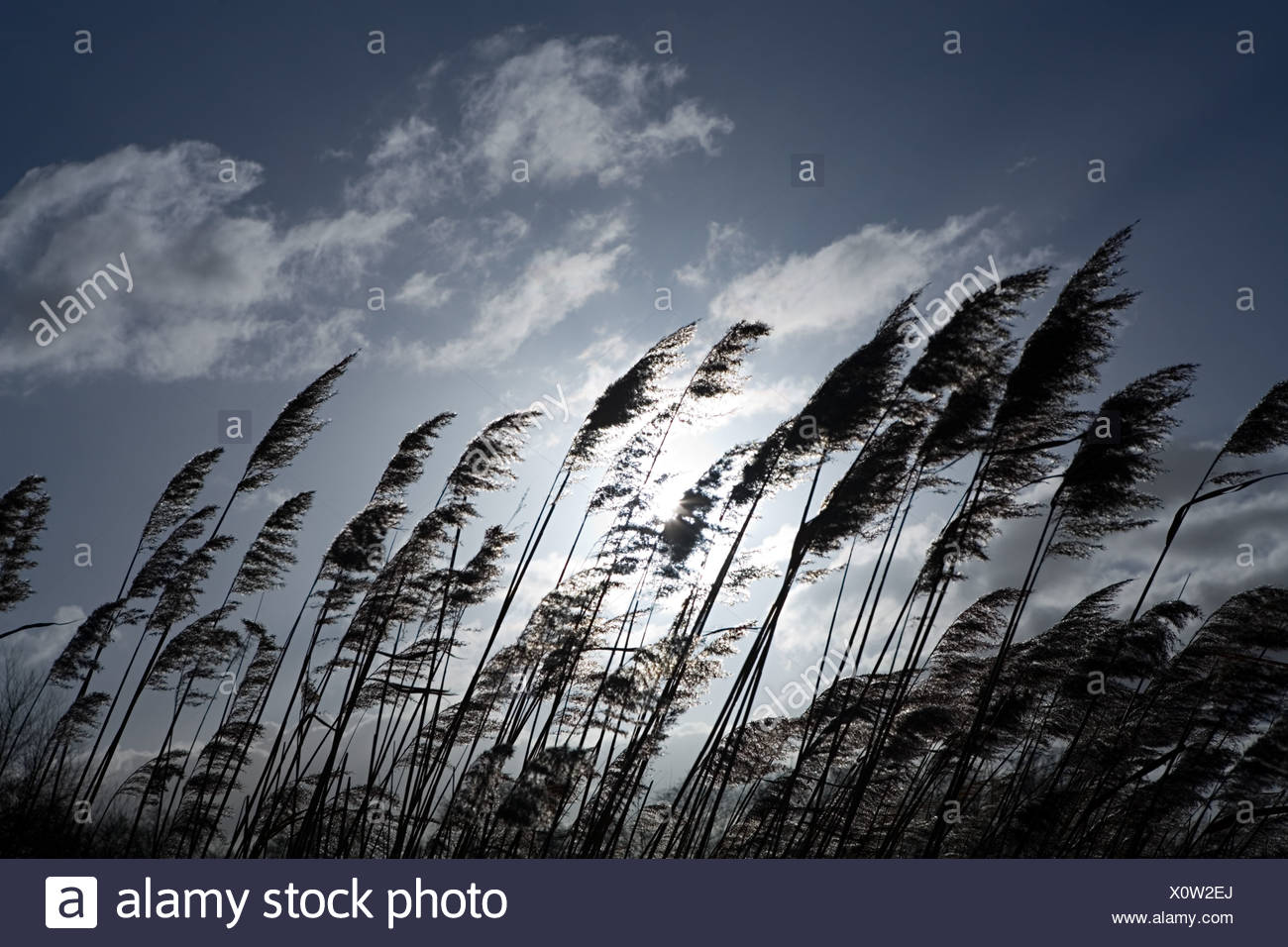 Grass blowing in breeze - Stock Image