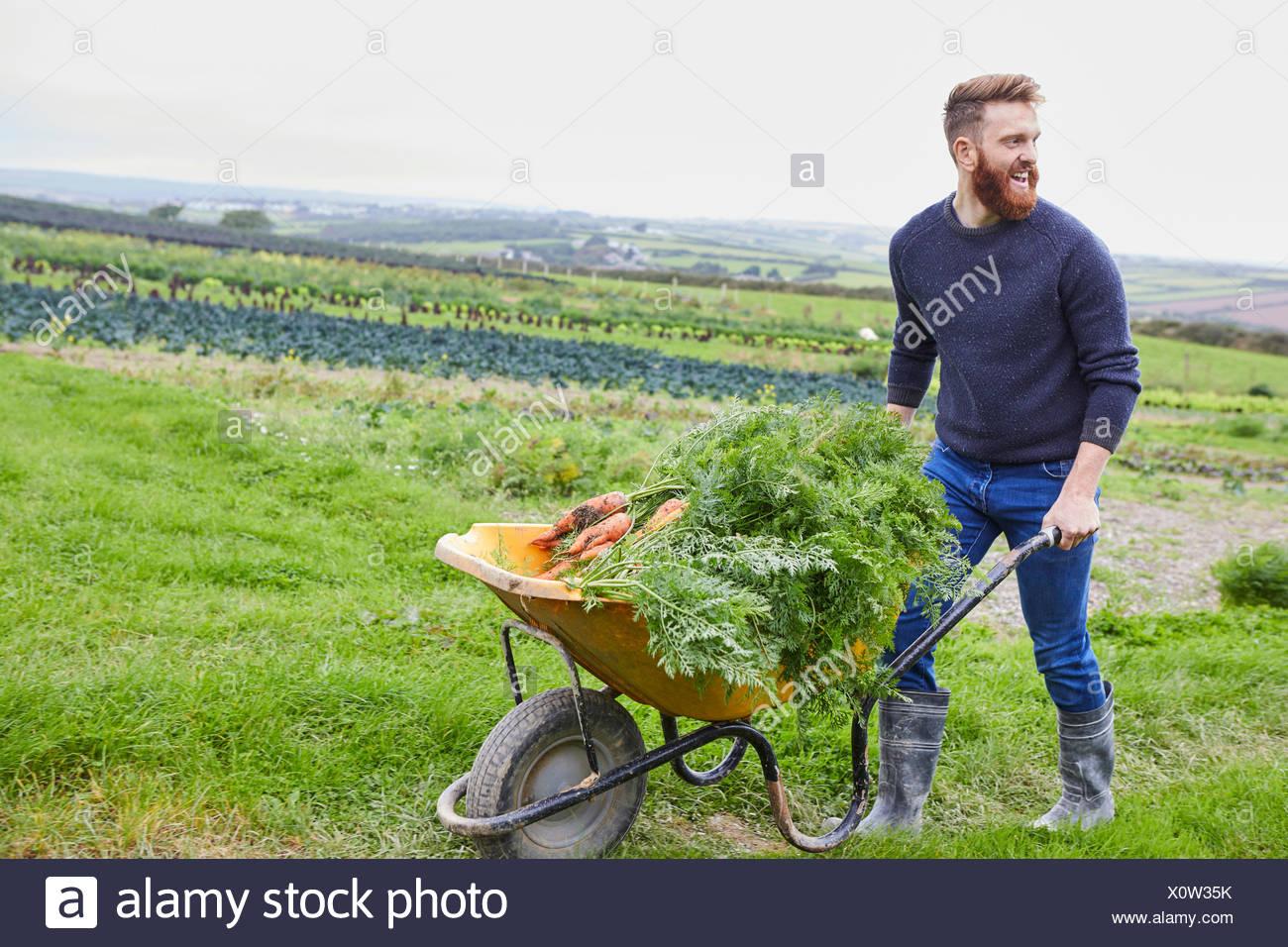 Man on farm pushing wheelbarrow of carrots - Stock Image