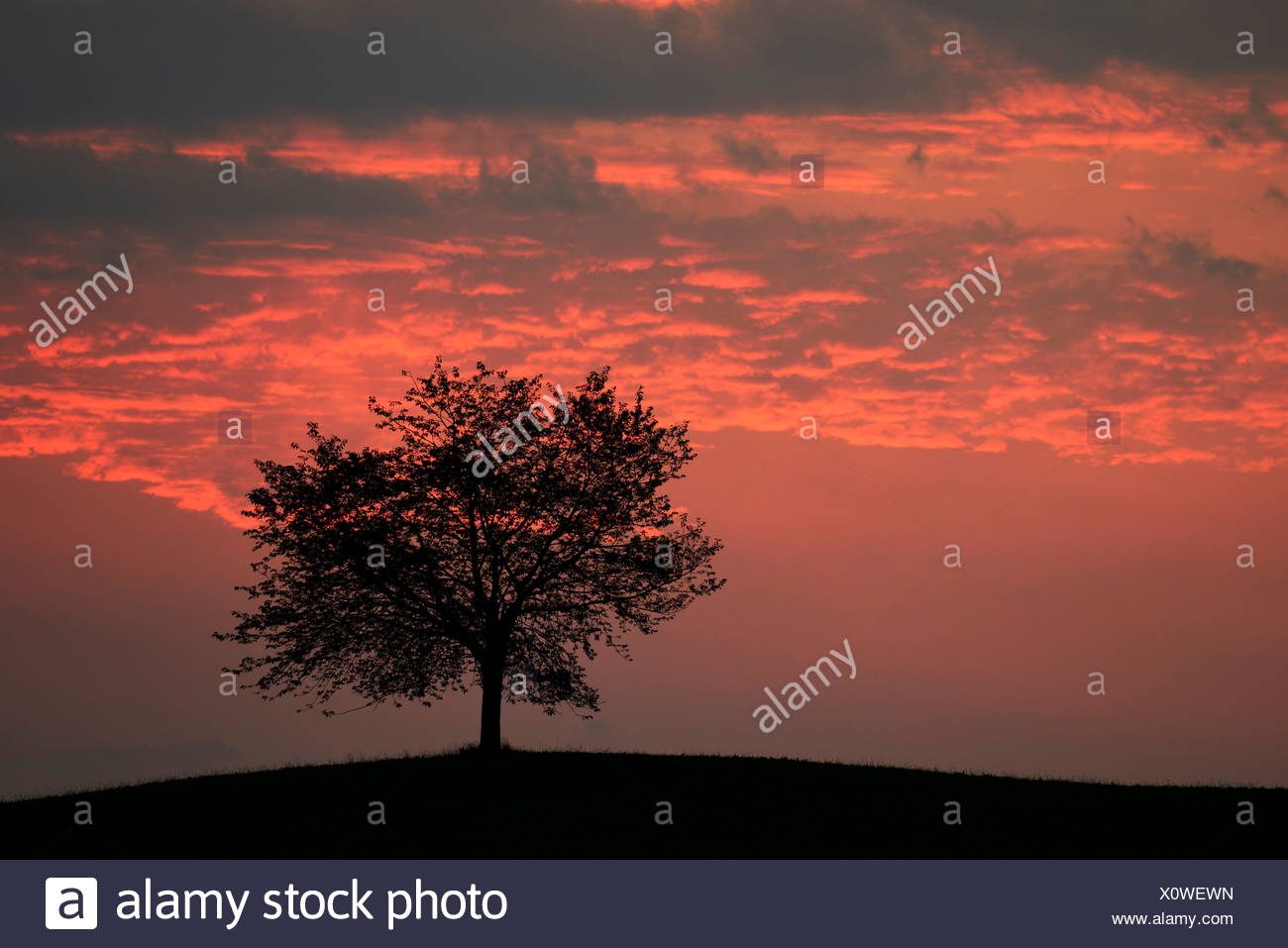 Tree silhouetted against a sky full of storm clouds - Stock Image