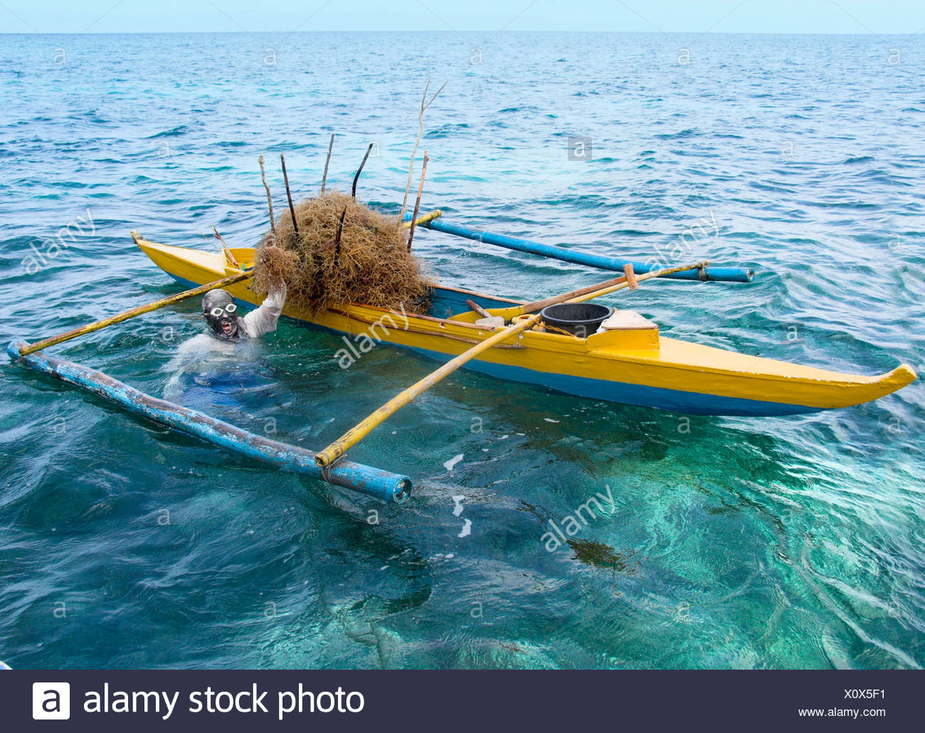 Philippine diver harvesting seaweed, Philippines, Pacific Ocean, Southeast Asia Stock Photo