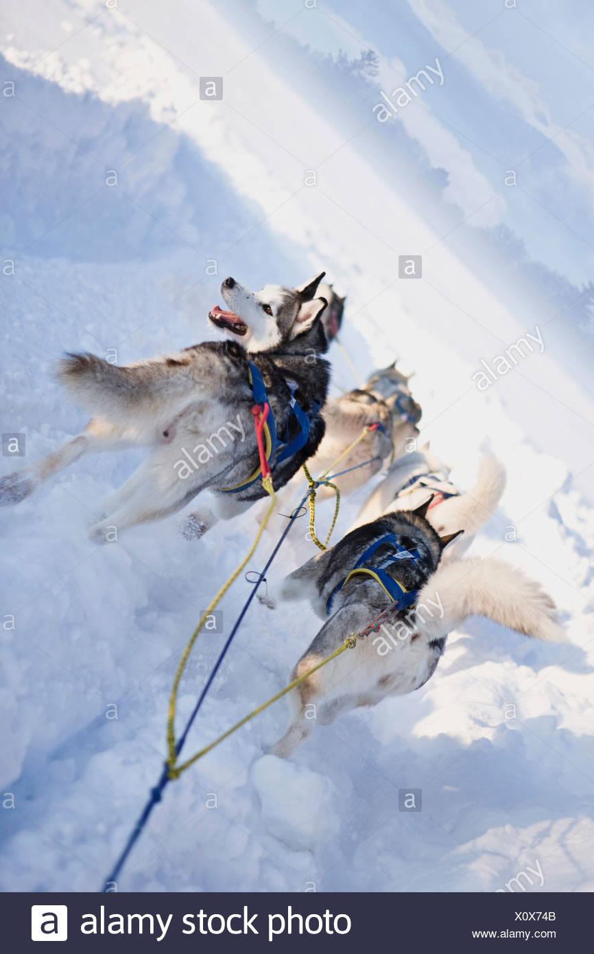 Dog sledge Stock Photo