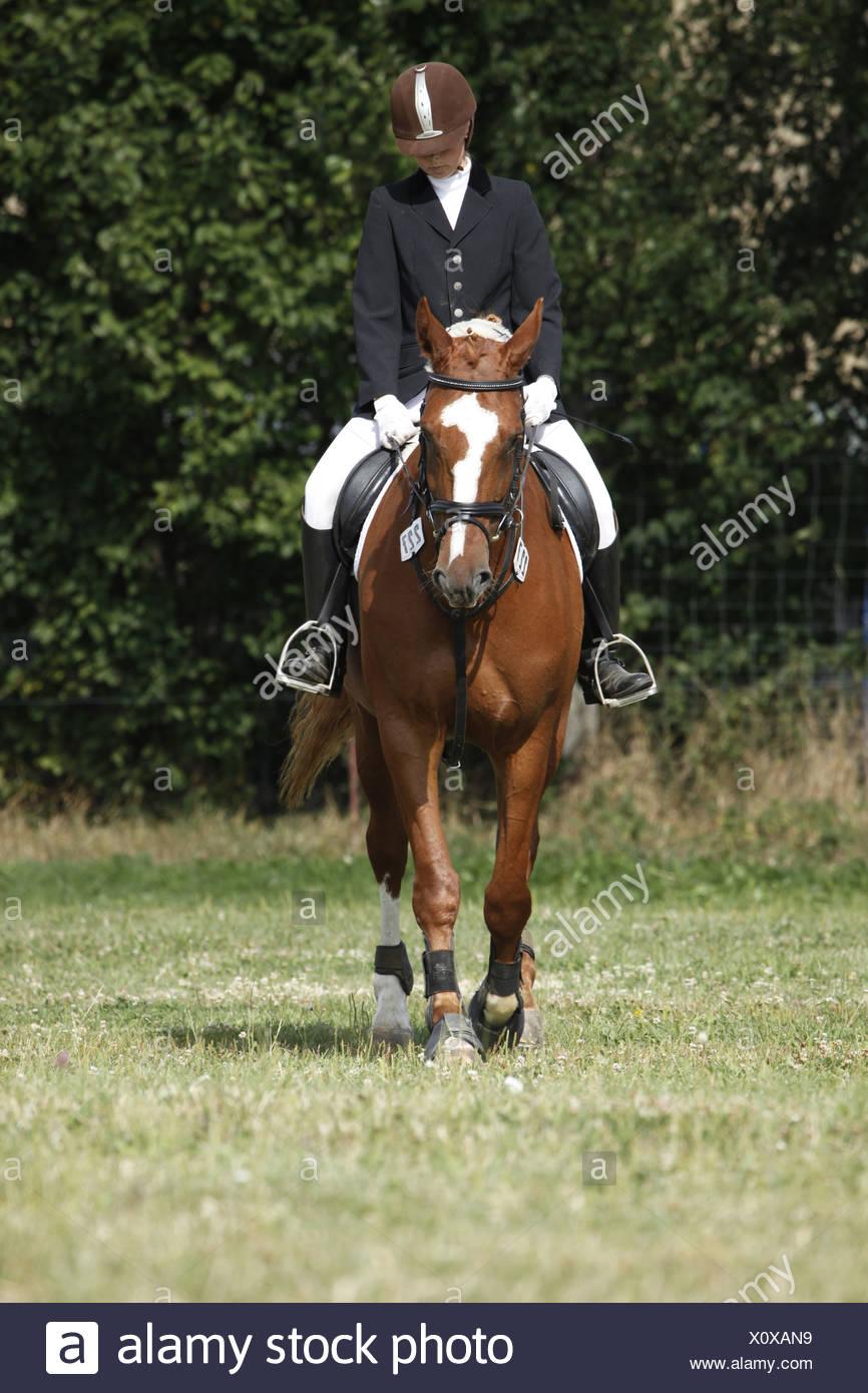 Reiterin auf Deutschem Sportpferd / riding woman Stock Photo
