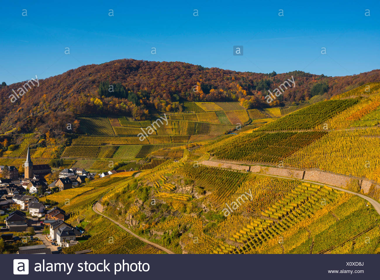 Ahrtal,cultivation,Germany,Eifel,Europe,autumn,autumnal,agriculture,Mayschoss,useful plant,parish church,Saint Nikola Stock Photo