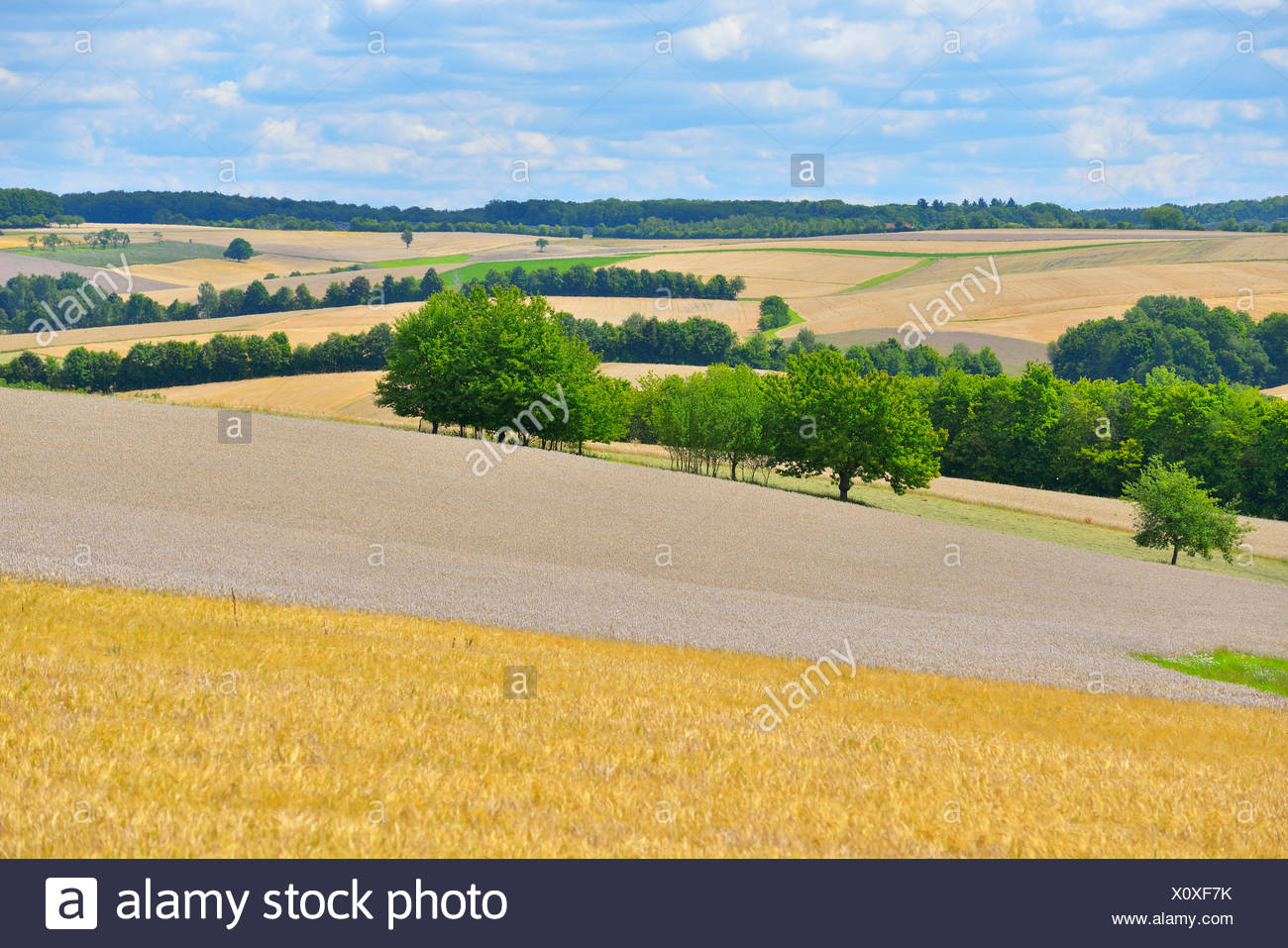 countryside with wheat field in the summer, Germany, Bavaria, Franken, Franconia, Arnstein - Stock Image