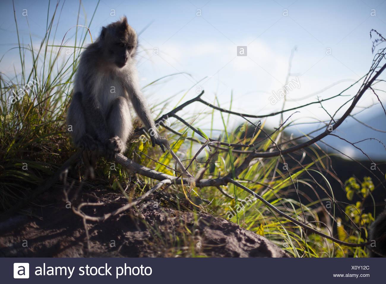 Monkey Grabbing Branch - Stock Image
