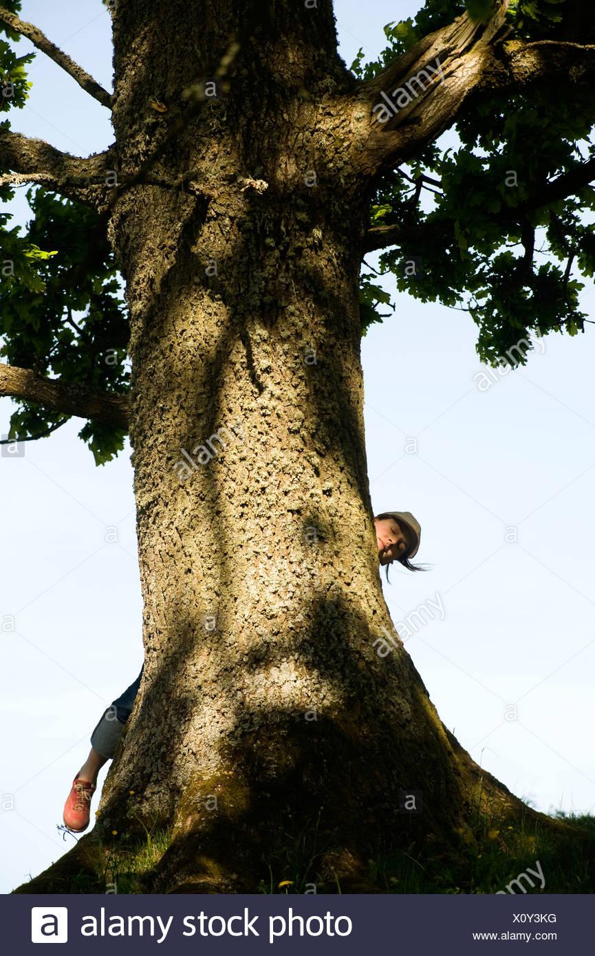 A woman behind an oak Sweden. - Stock Image