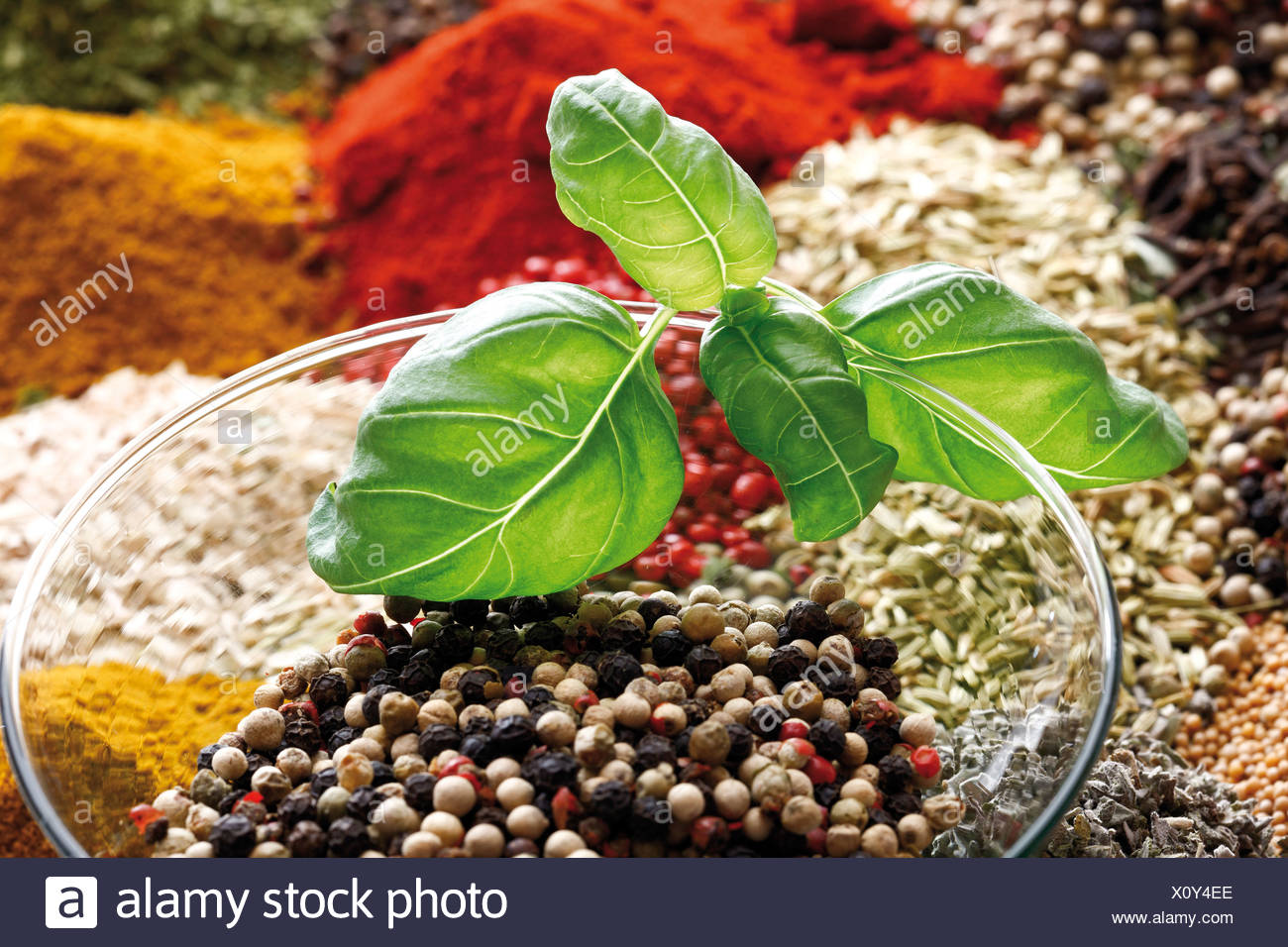 A selection of spices, close-up - Stock Image