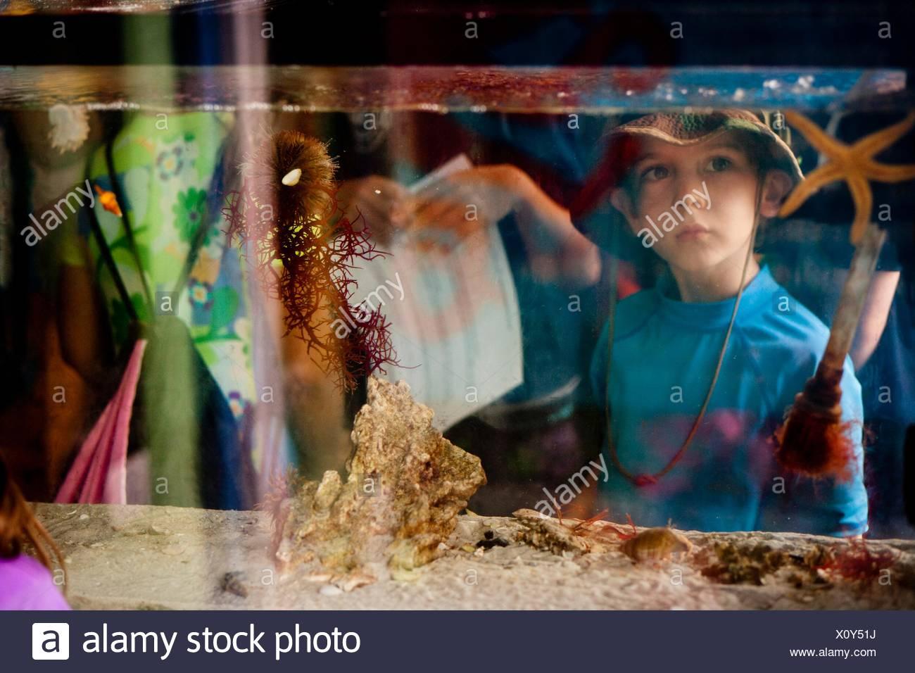 View through salt water aquarium of young boy looking at starfish - Stock Image