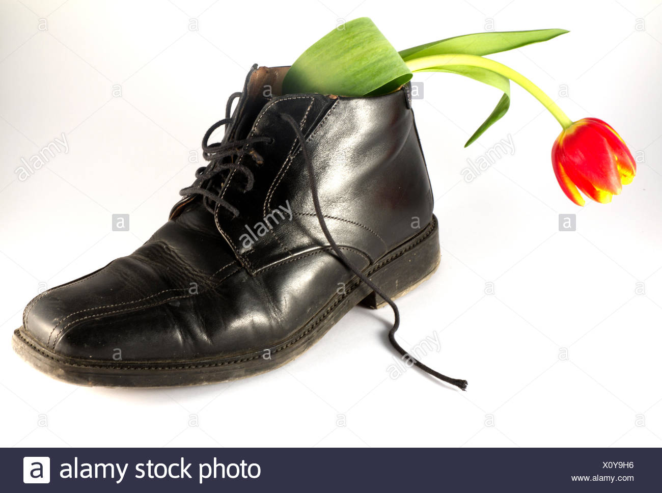 still life flower plant tulip abstract shoe still life flower plant tulip - Stock Image