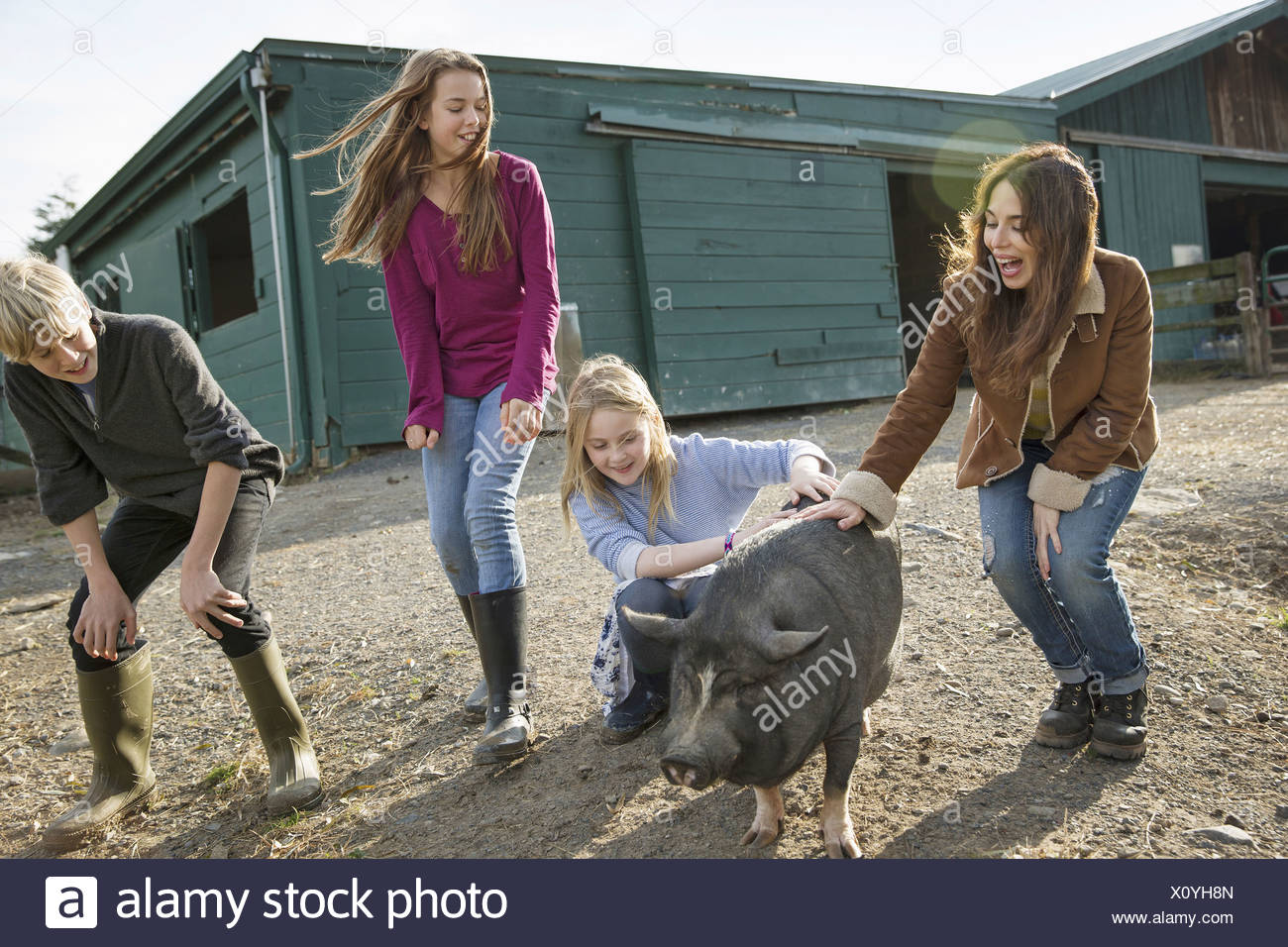 Three children and a young woman with a large pig in the pigpen at an animal sanctuary - Stock Image
