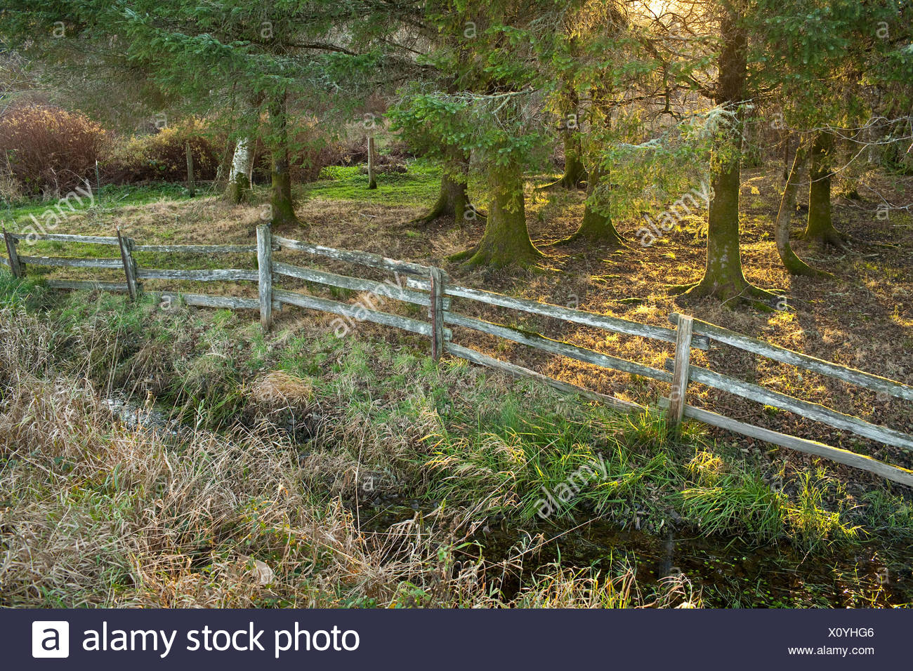 Wooden fence in forest - Stock Image