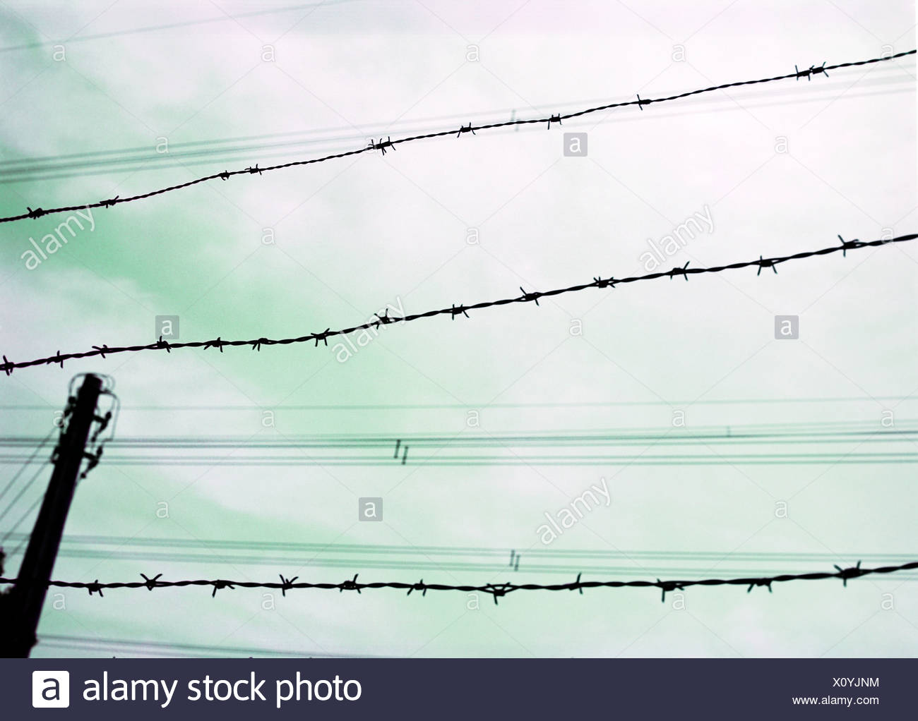 Barbed Wire Fence, close-up Stock Photo: 275973312 - Alamy
