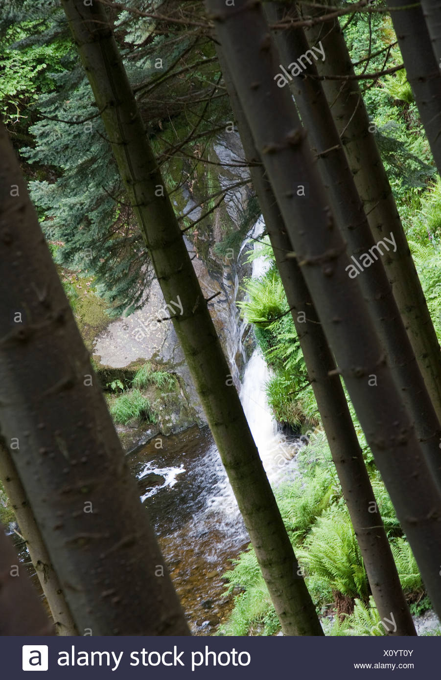 es, The Peiran Falls, seen through the trees Hafod, in the remote and then almost inaccessible Ystwyth valley in mid Wales, was - Stock Image