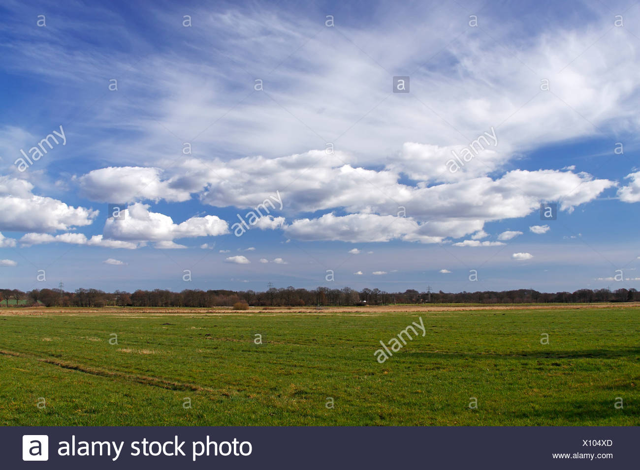 Landscape with white clouds on blue sky, green meadows in spring, nature reserve Oberalsterniederung lowland, Schleswig-Holstei - Stock Image