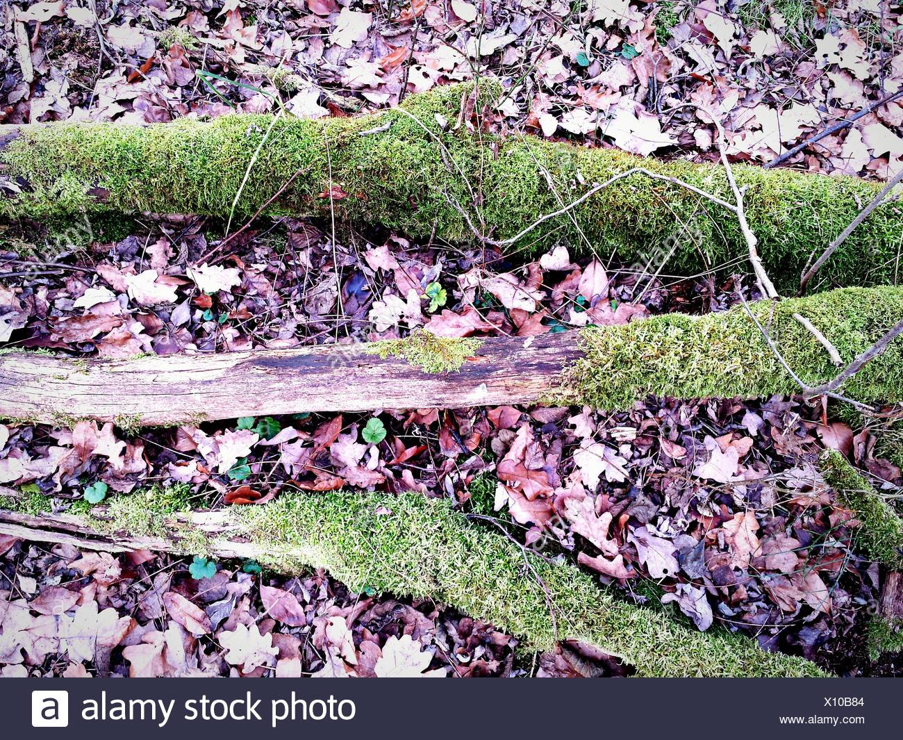 High Angle View Of Moss Covered Tree Roots In Forest Stock Photo