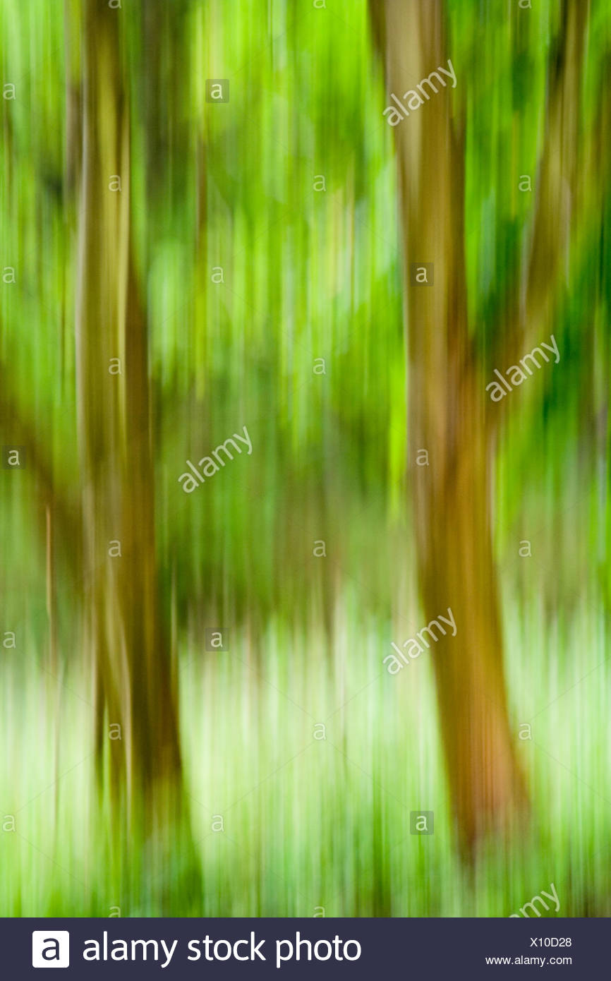 tree,trees,green,branch,ambiguous,forest,leaves,foliage,trunk - Stock Image