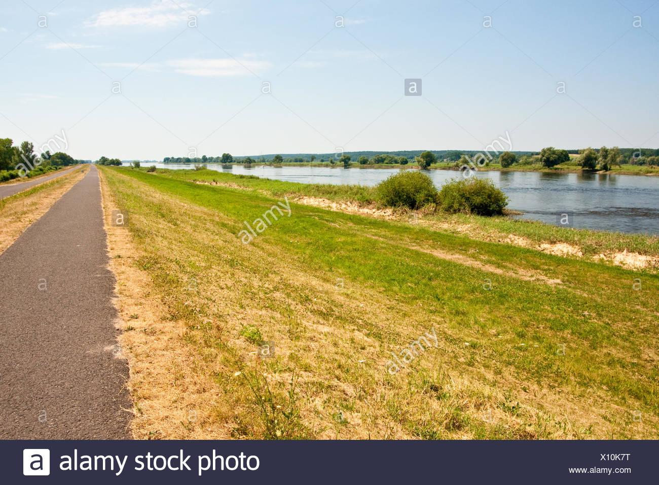 Der Fluss Oder, River Oder - Stock Image