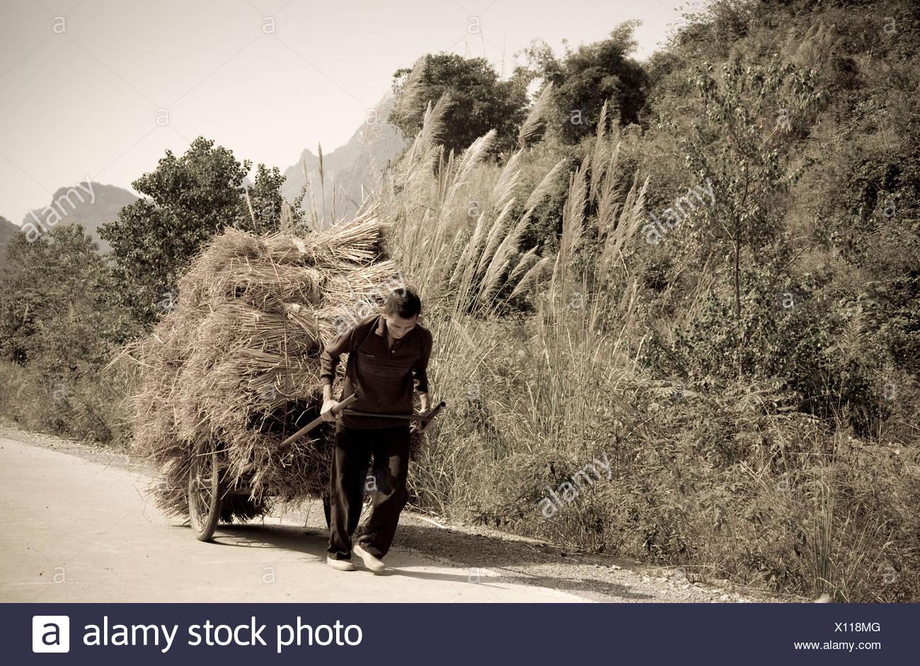 Man Carting Hay Down A Road - Stock Image