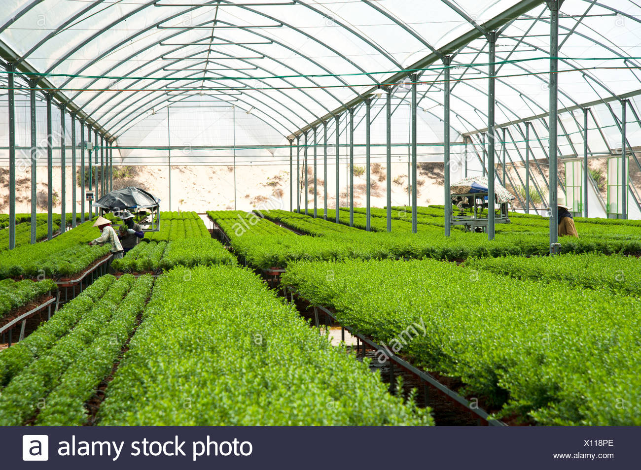 Magnificent Israel Aravah Desert Plants In A Greenhouse Stock Photo Home Interior And Landscaping Oversignezvosmurscom