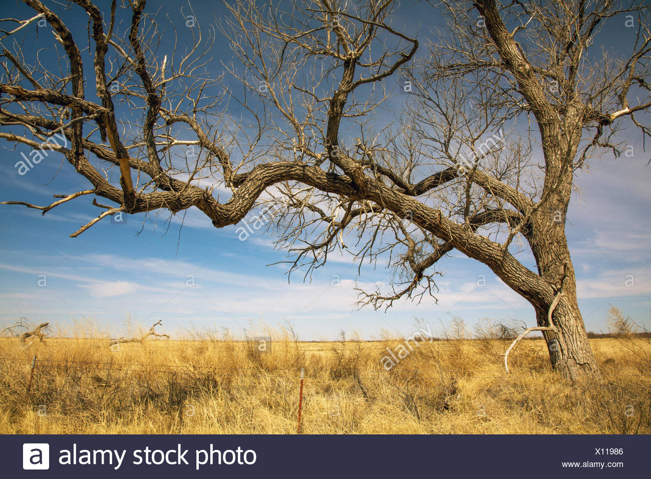 Landscape in Texas - Stock Image