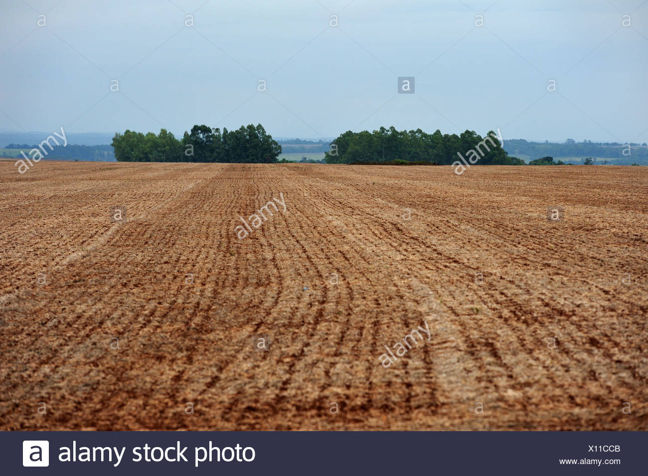 Plowed field owned by a large-scale landowner, remains of the original forest vegetation at the back, Alto Parana, Paraguay - Stock Image