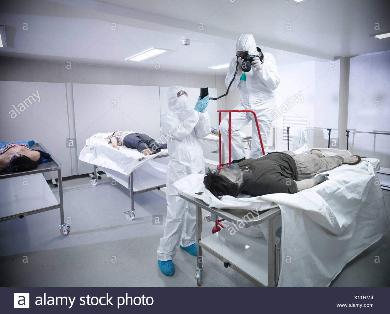 Forensic scientists with false corpse - Stock Image