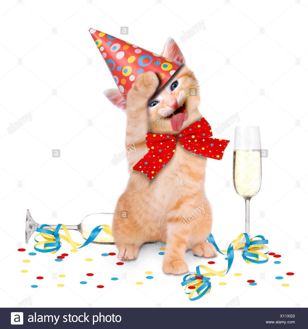 Party Katze