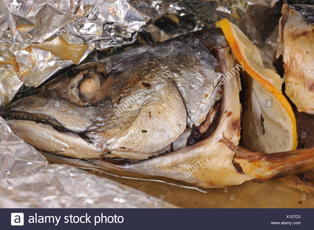 Mackerel - Stock Image