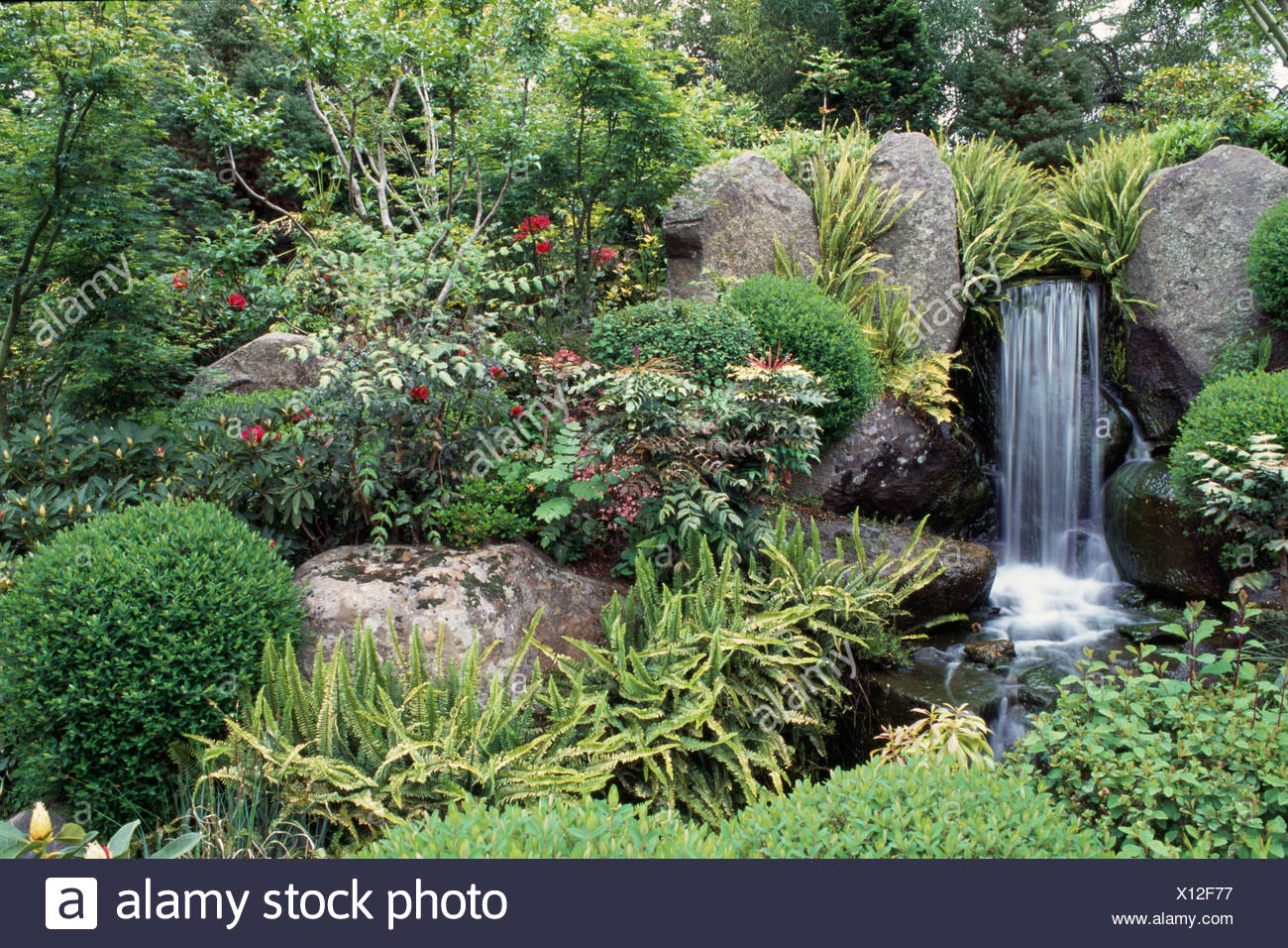 Waterfall Pool Lined With Hart S Tongue Fern And Surrounded By Evergreen  Trees And Clipped Shrubs