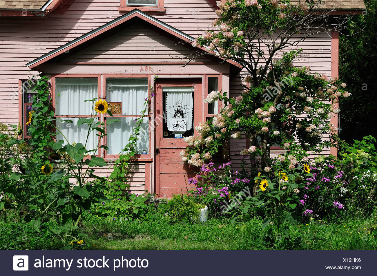 Canada, Garden, Quebec, Stanbridge East, faded, flowers, home, horizontal, house, pink, summer, sun flower, sunny, vines - Stock Image