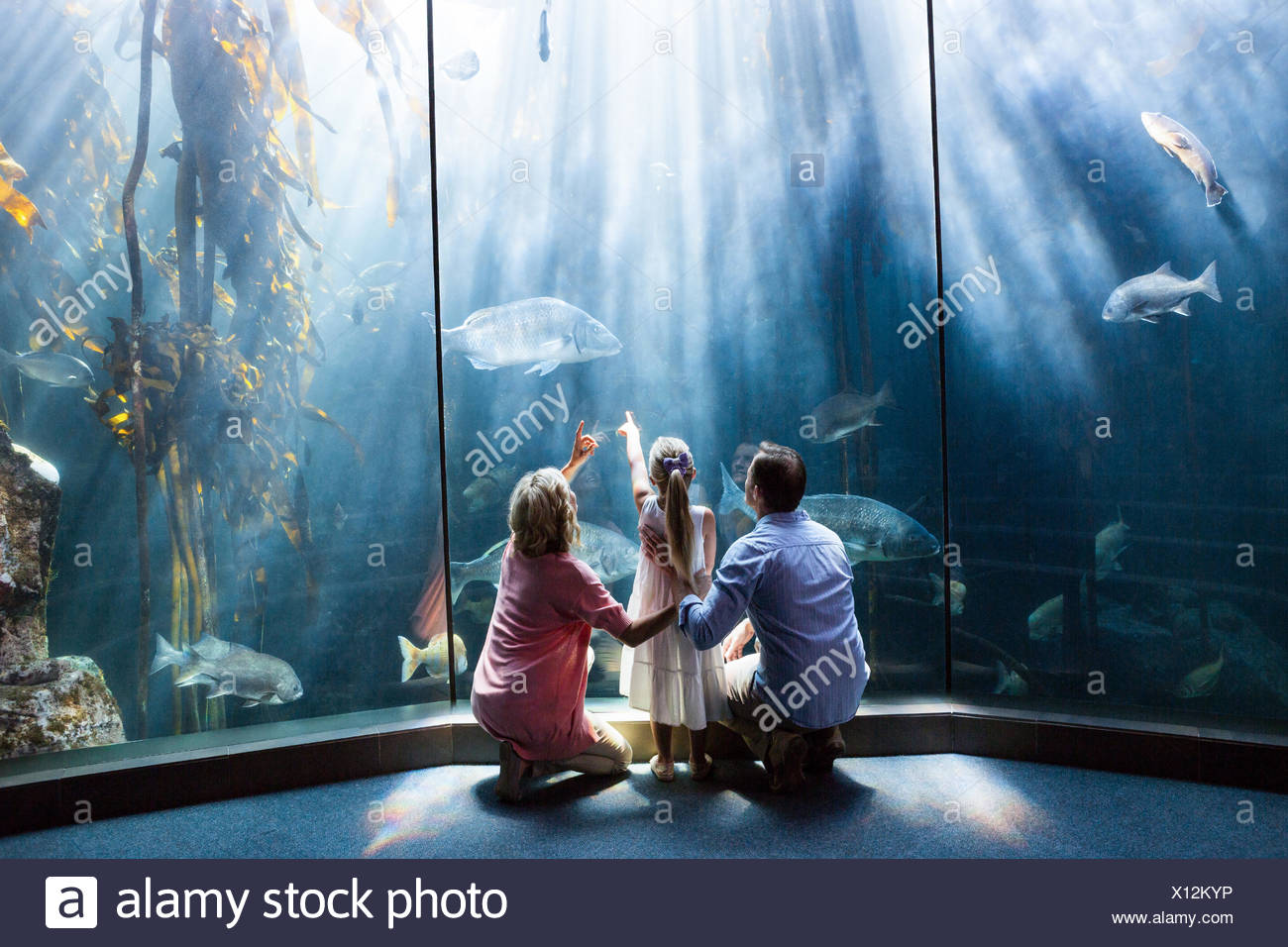 Wear view of family looking at fish tank - Stock Image