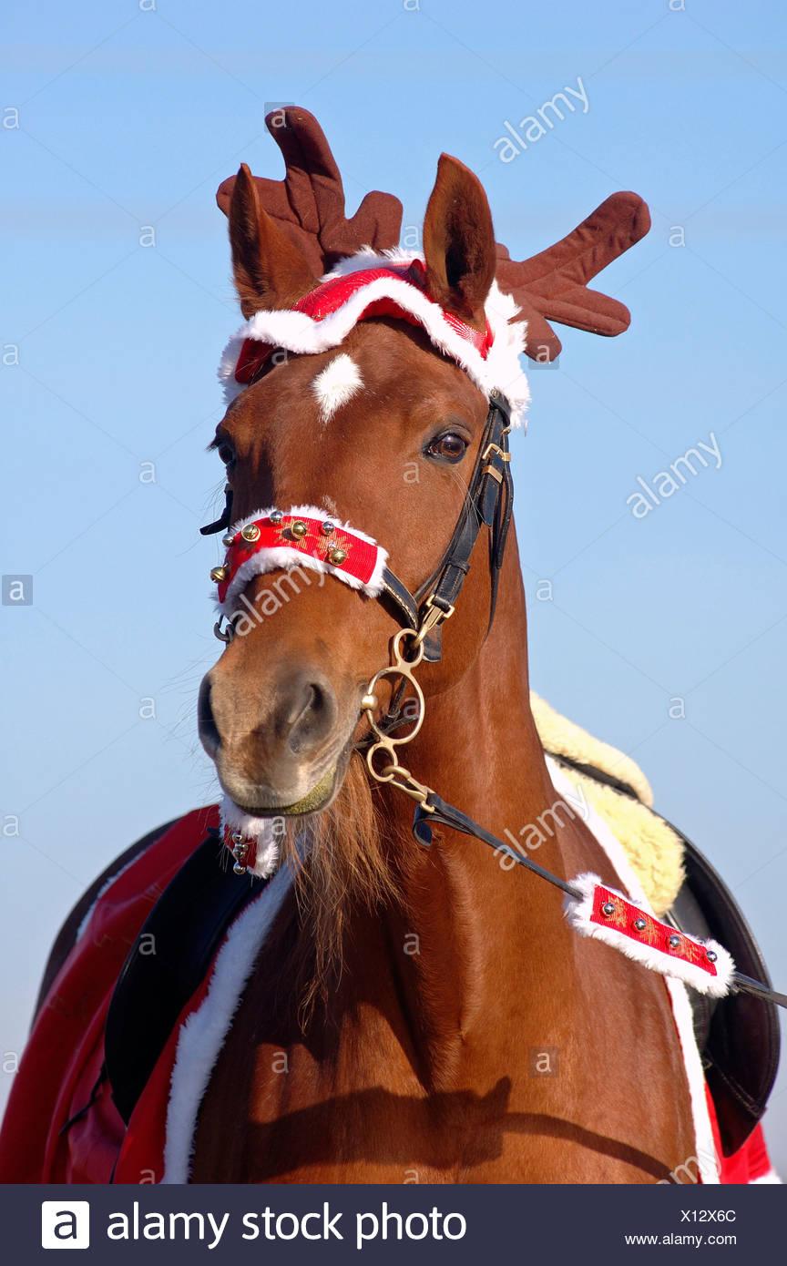 Christmas Horse Stock Photo Alamy