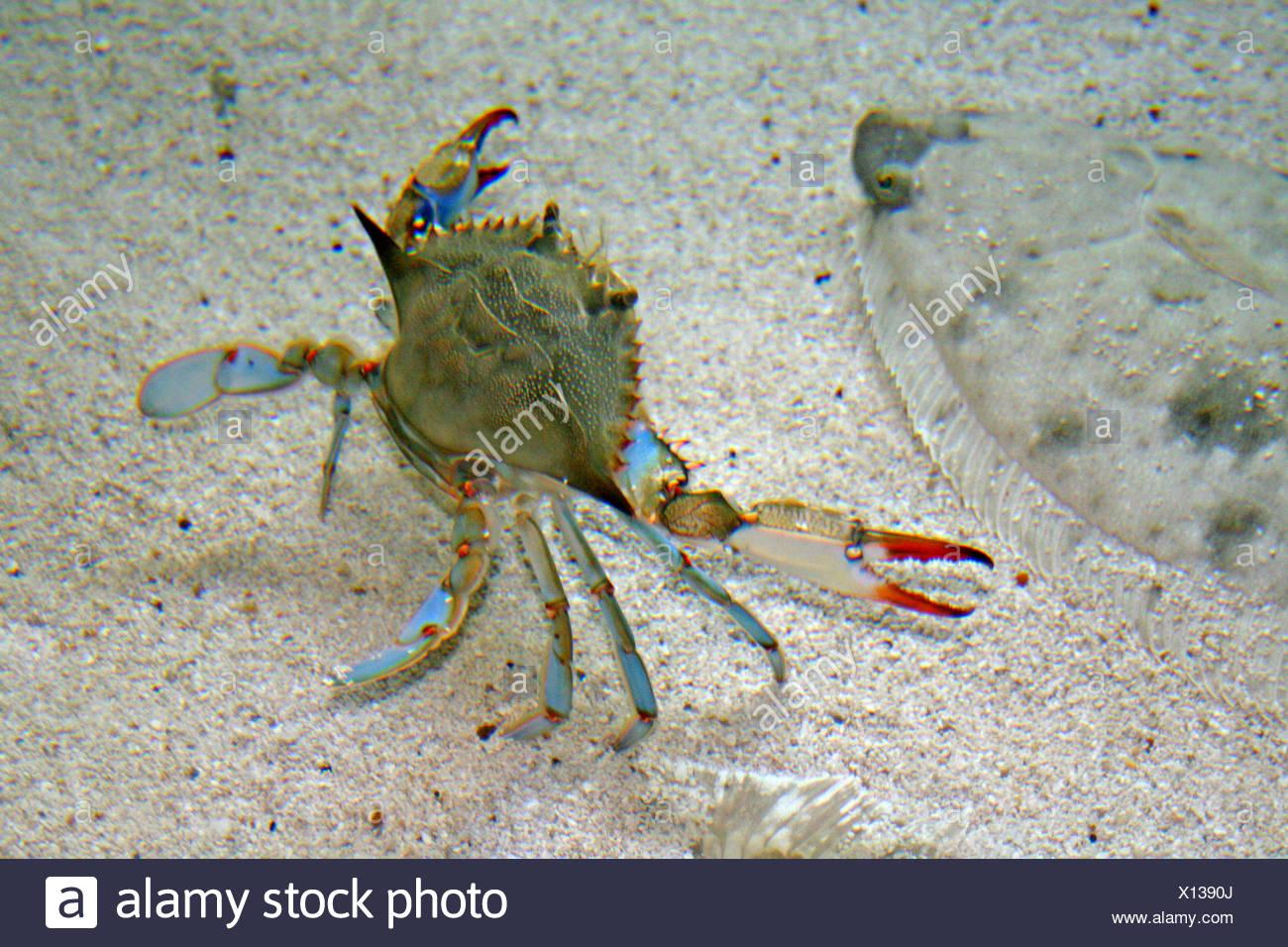 Crab North Carolina Stock Photos Amp Crab North Carolina