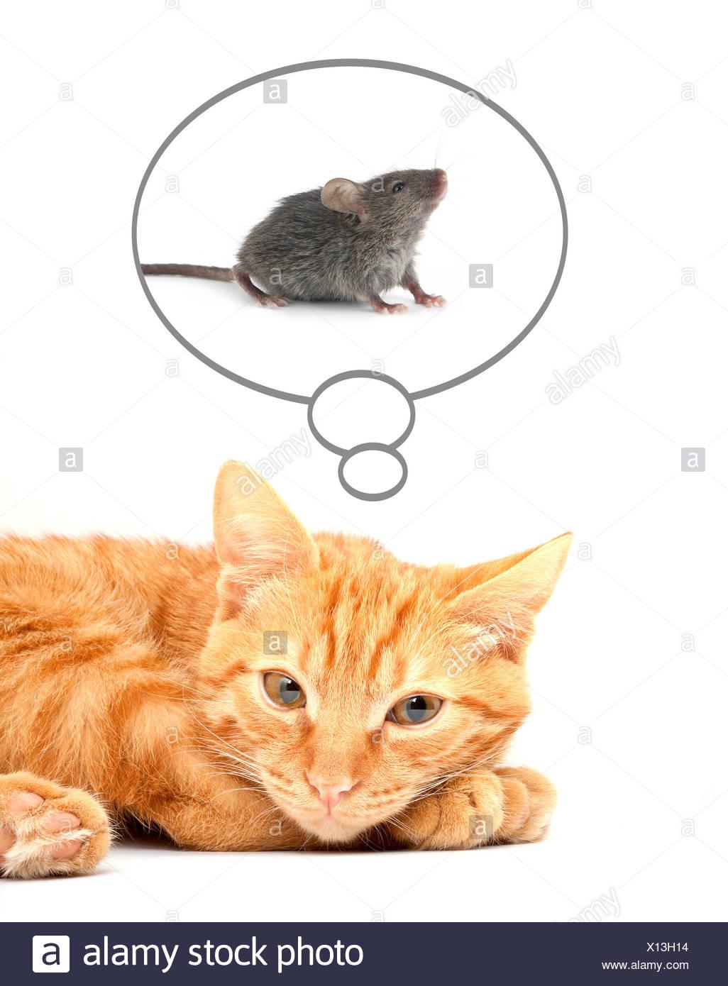 Cat - Stock Image