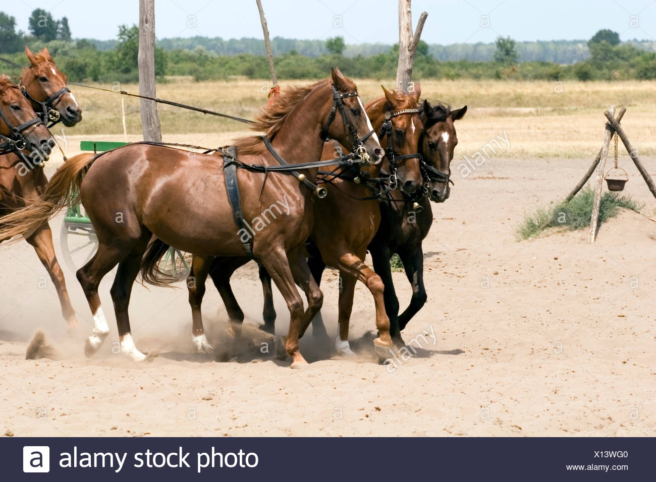 horse animal mammal homey domestic motion postponement moving movement sport - Stock Image