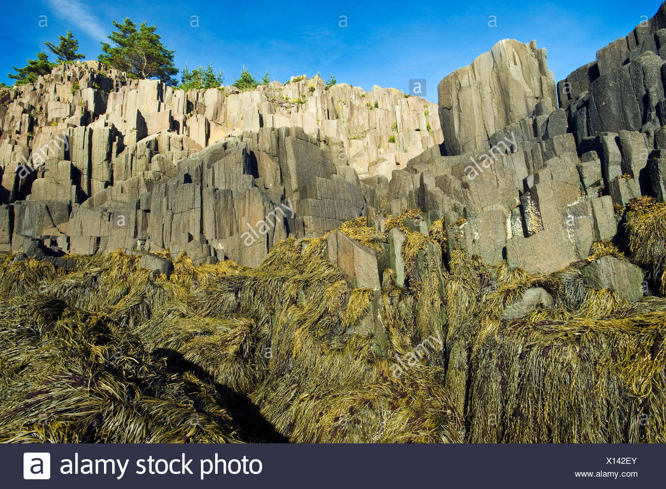 basalt rock cliffs, Brier Island, Bay of Fundy, Nova Scotia, Canada - Stock Image