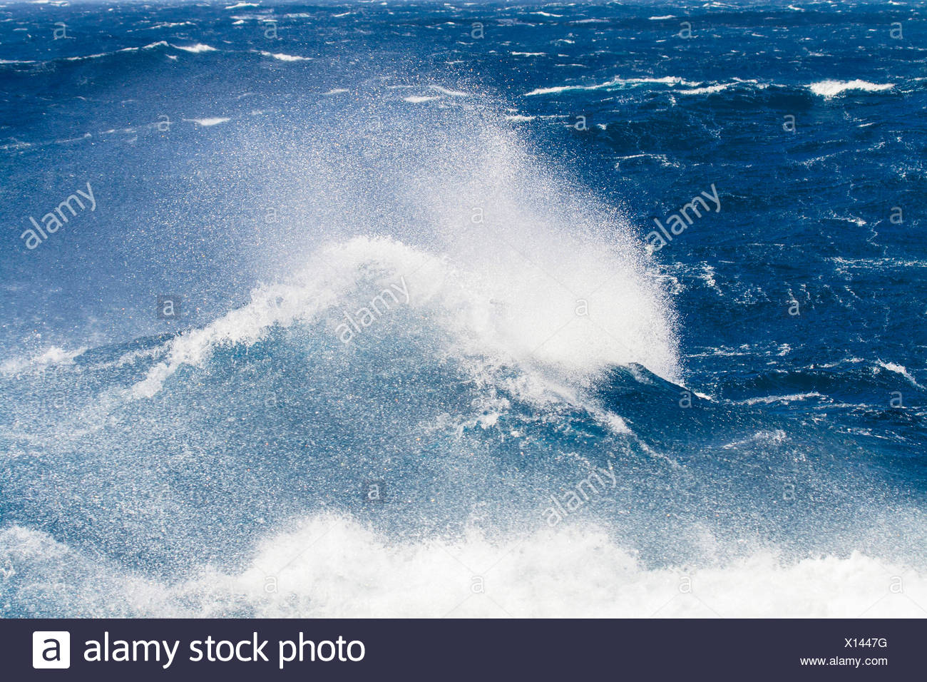 waves of the Southern Ocean at South Georgia in the Subantarctic, Suedgeorgien - Stock Image